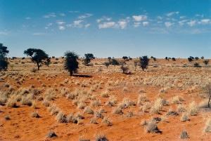 El desierto de Kalahari, en Namibia. Crédito: Elmar Thiel