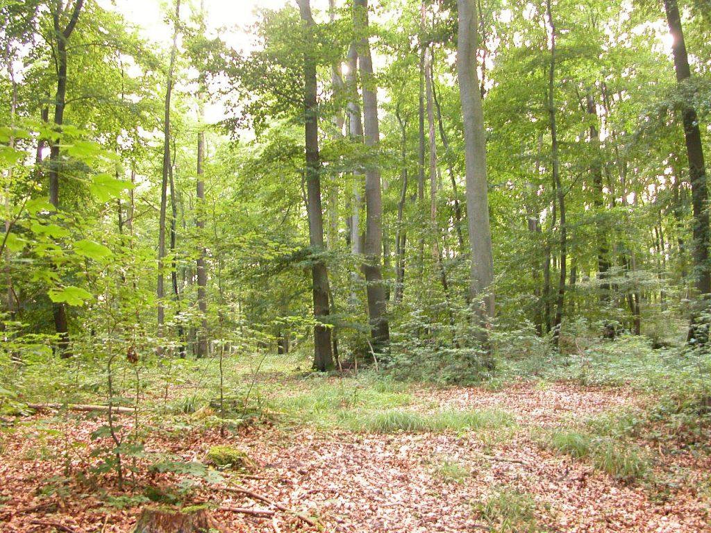La aparición de organismos fotosintéticos es esencial para que puedan obtenerse atmósferas respirables.